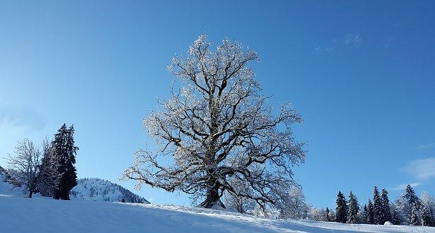 tree-3021947__340