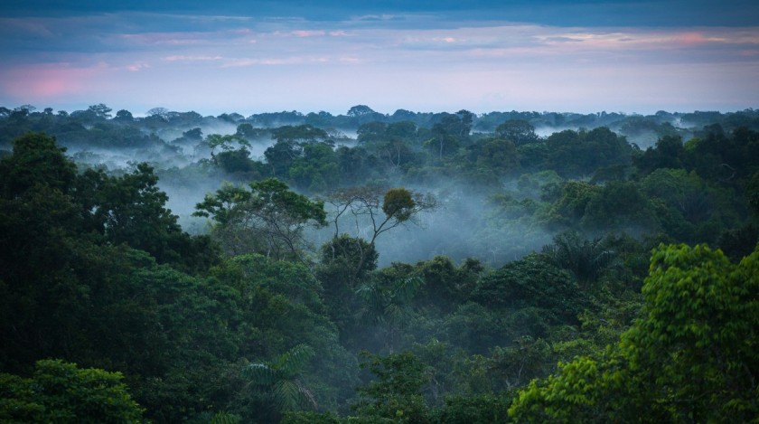 Brazilian_amazon_rainforest