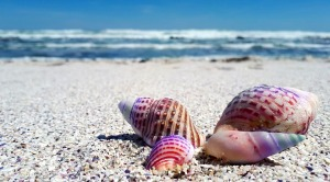 seashell-2821388_960_720