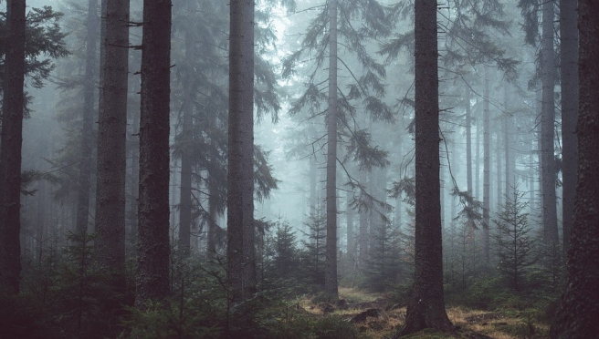 forest-1208296_960_720